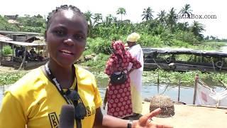 Nigeria's Crocodile Meat Market