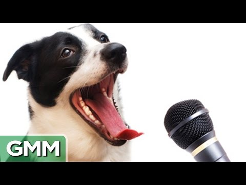 6 Animals Who Can Speak Human MP3