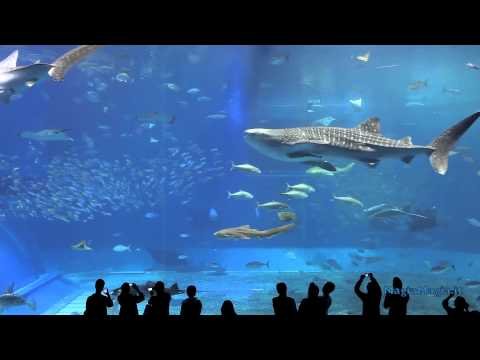 2 Hrs Aquarium relax music