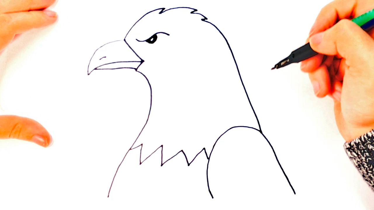 How to draw a realistic eagle step by step