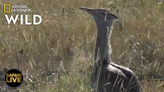 Safari Live - Day 342 | Nat Geo Wild