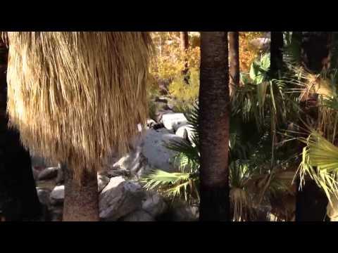 Palm tree oasis - anza borrego