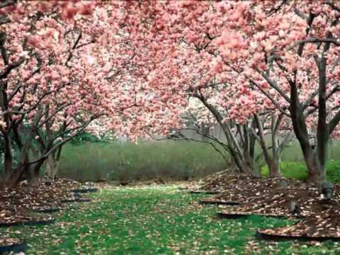 Вивальди Антонио - La Primavera Allegro 1
