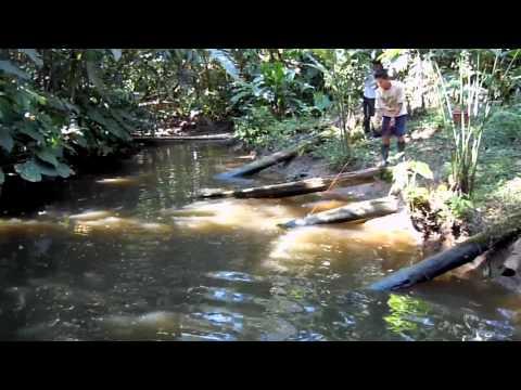 Misahualli, Amazona - Ecuador