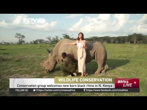 Conservation group welcomes new born black rhino in Northern Kenya