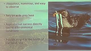Jenn Lang — Monitoring seabirds across Puget Sound using community science