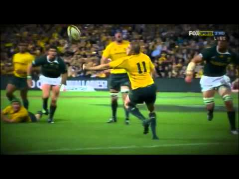 WALLABIES RUGBY TRIBUTE