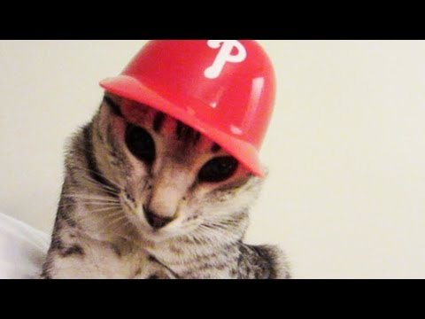 baseball-kitty.html