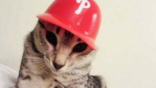BASEBALL KITTY