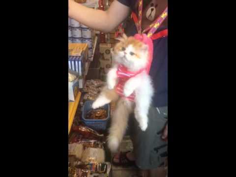 猫とお買い物。衝撃の可愛さ♪