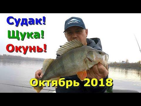 Судаки , щуки , окуни . Рыбалка на Волге в конце октября .
