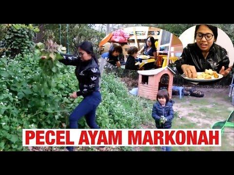PECEL AYAM MARKONAH || HAUL PASAR KODOK || TUKANG KEBON LAGI