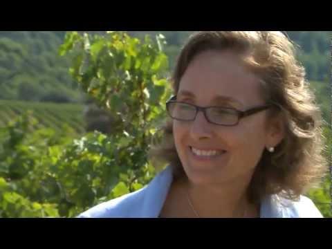 En primer viñedo de Cabernet Sauvignon plantado en España