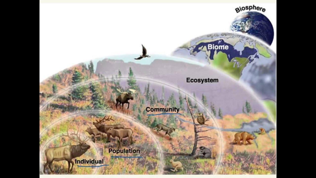 ... biological classification 13 levels of biological organization levels