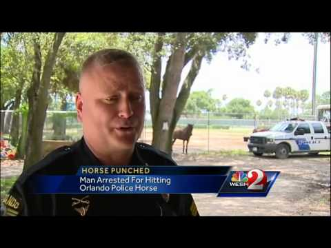 Man threw punch at police horse, officers say