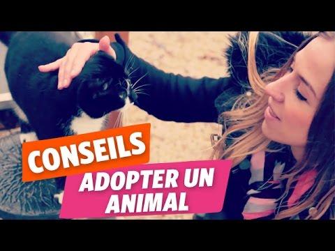 ✿ Emmy vous livre les astuces pour adopter un animal de compagnie  ✿