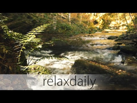 Music for Studying Concentration and Reading [relaxing] - N°099
