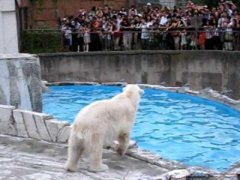 夜の動物園3