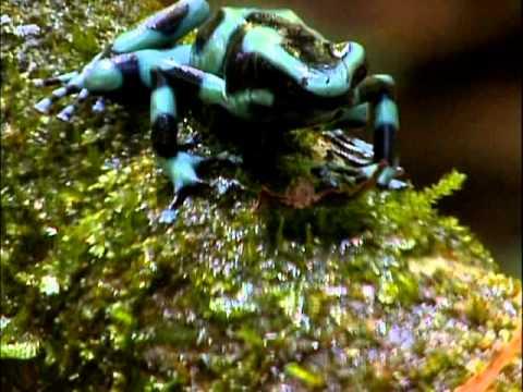 Aventura Selvagem - Universo dos Anfíbios 27/07/13 - Parte 1