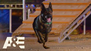 Live PD K9 Dax Competes Against Falco in Fast Timed Race | America's Top Dog (Season 1) | A&E