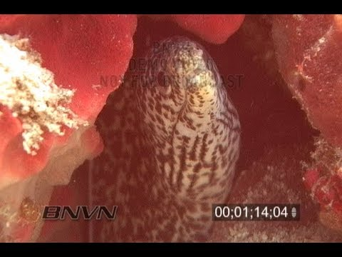 2/10/2007 West Palm Beach, FL Reef and Moray Eel video