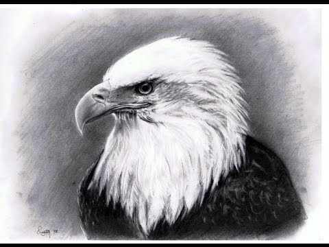 BALD EAGLE HEAD - Speed  Eagle Head Pencil Drawing Easy
