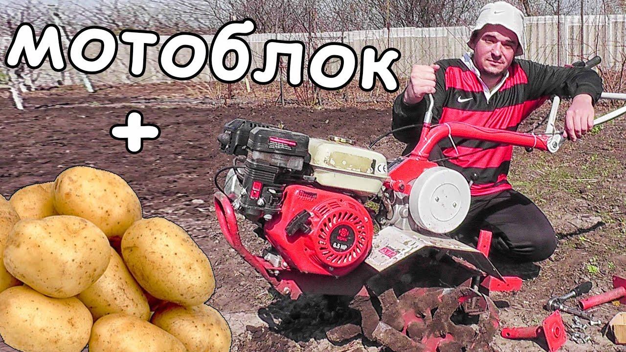 Сажать картошку под мотоблок
