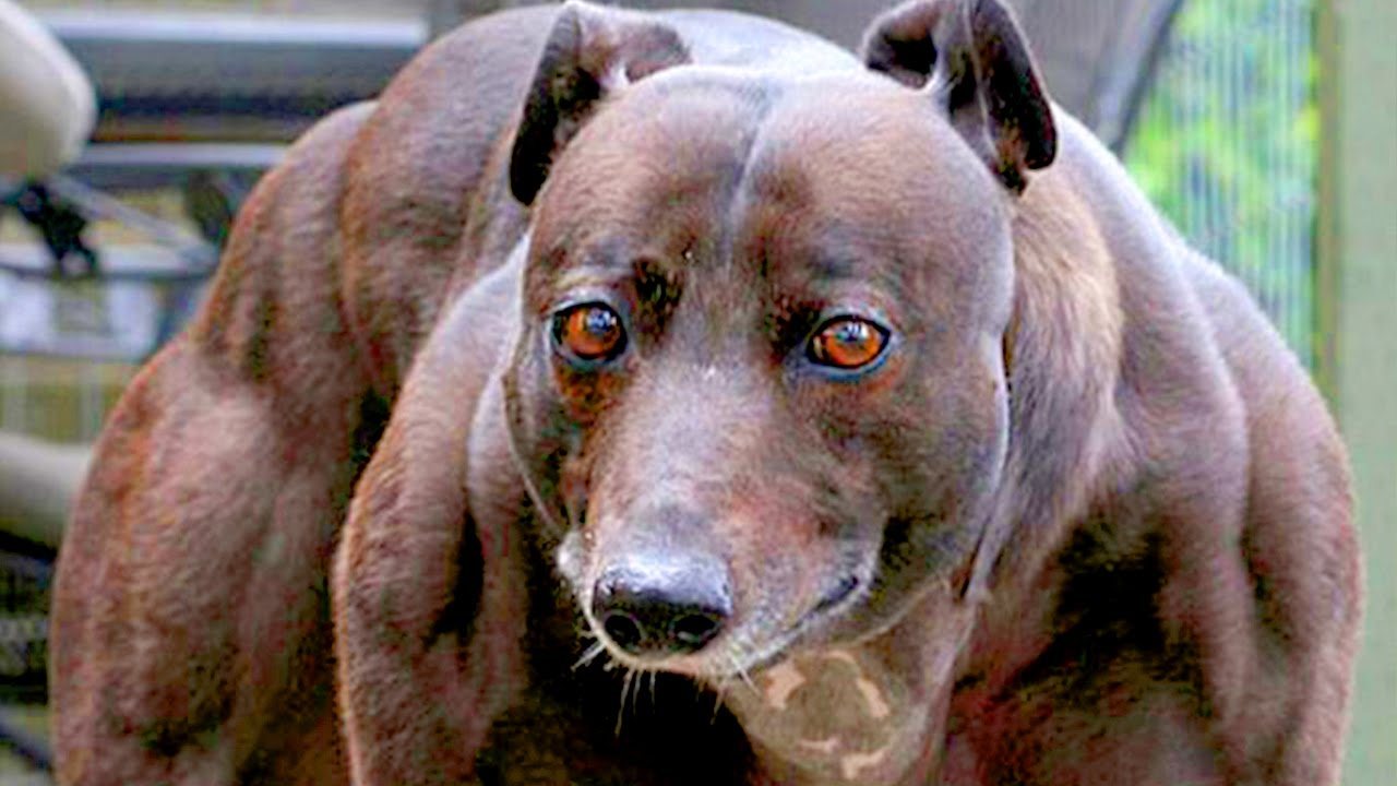 10 Most Unusual Pets E...