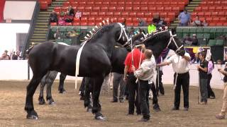 Bentley 2014 World Percheron Congress HD