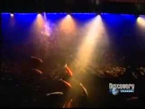 Domotica Bticino – Documental Discovery Chanel