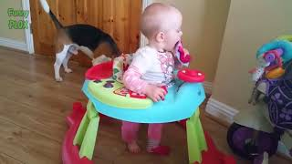 Cute Dogs and Twins Babies Playing Together - Dog Playing with Baby Twins - Youtube