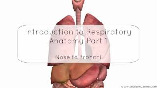 Introduction to respiratory system part 1