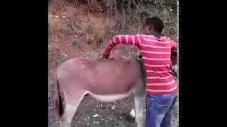 Kickstart the Donkey. Very funny video. Donkey Video
