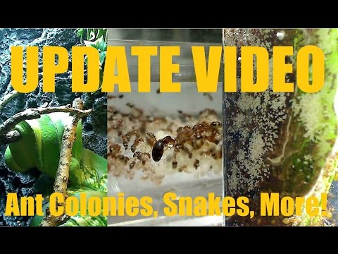 Update on My Current Personal Ant Colonies & Other Cool Pets