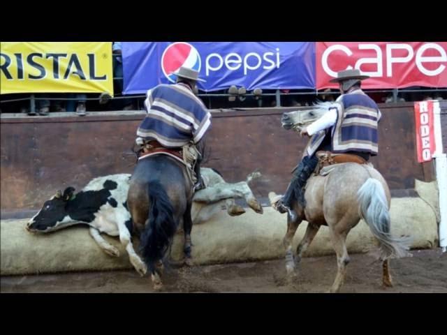 Valdebenito y Corvalán [Criadero Peleco] - 65° Campeonato Nacional de Rodeo Rancagua 2013
