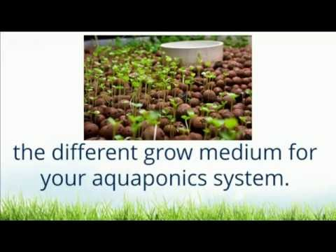 What Is The Best Grow Bed Media/Medium For DIY Aquaponics