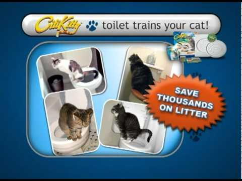 why does a cat poop outside the litter box