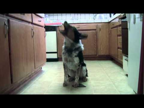 Questo Cane è un Vero Genio!