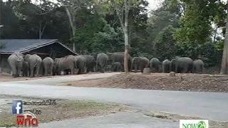 News ช้างป่า 20 ตัวล้อมบ้านเขาใหญ่