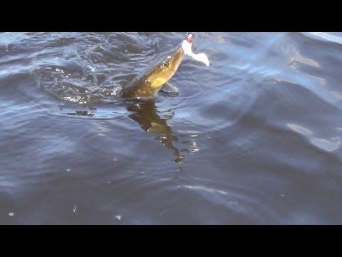 ловля щуки в мелких озерах