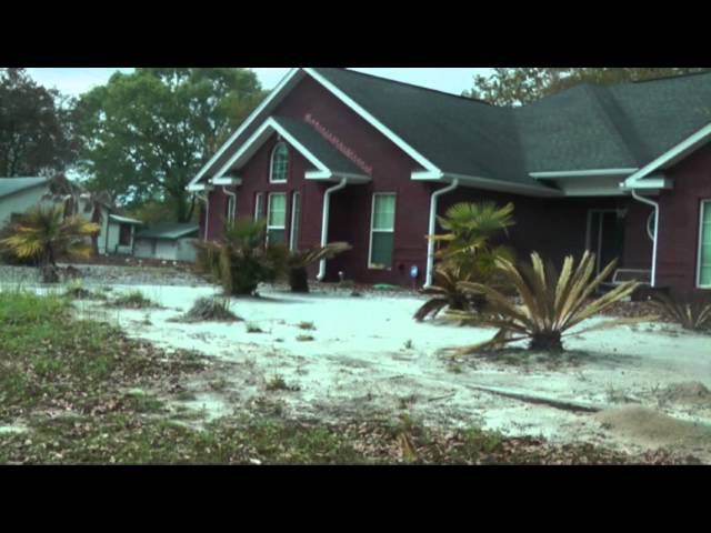 Freeze Leaves Florida Panhandle With Dead Trees
