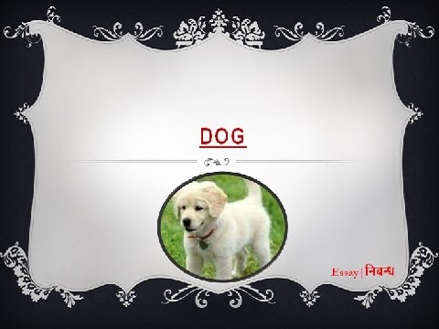 0 Words Essay for Kids on the Dog - PreserveArticlescom