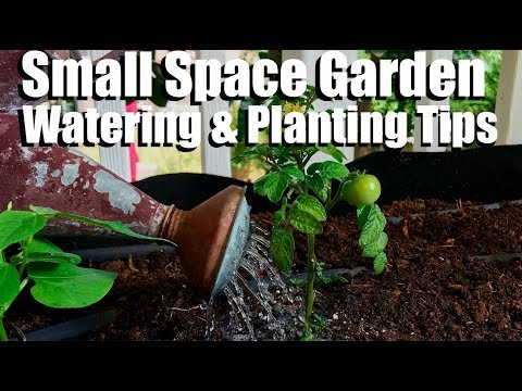 Container Watering Options & Tips for Planting Compact Veggies//Small Space Garden Series #2