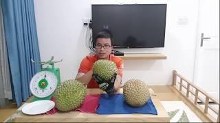 Sầu Riêng Musang King Malaysia đấu với Sầu Riêng Ri6 Việt Nam.