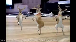 Funny Baby Goat Dancing; Dance Paglu Dance. Ha Ha Ha........