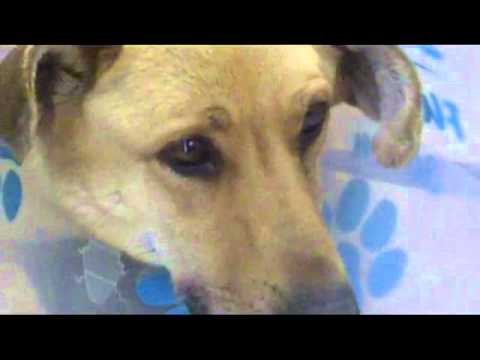 Animal Abuse Quebec   The Story About Angel - An Abused Dog