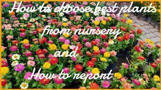 How to choose healthy plants from nursery and how to report in pot( plastic pot)