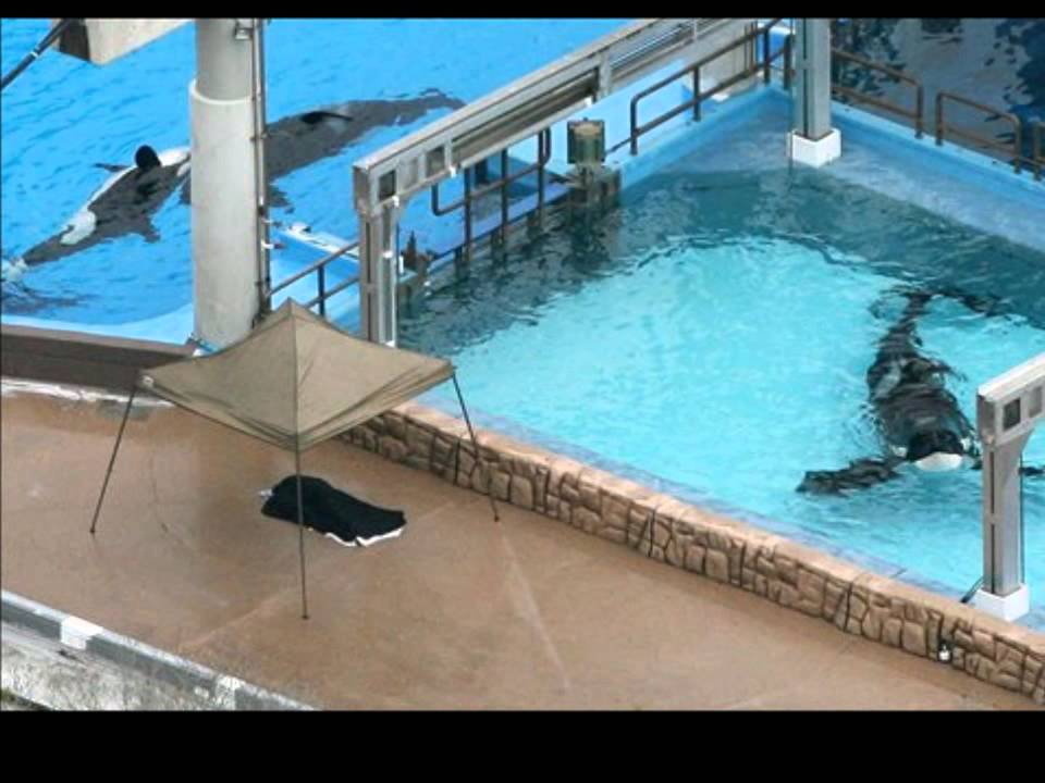 Common Myths about Dolphin and Whale Captivity - YouTube