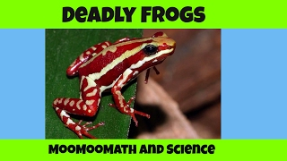 Kissing these frogs could kill you-7 Deadly Frogs