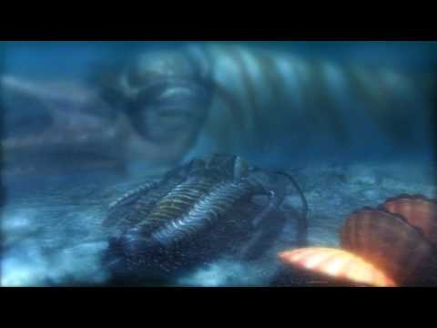Prehistoric Nautiloid - Rayonnoceras Espeyense